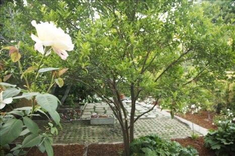 Terrill_garden1_600px